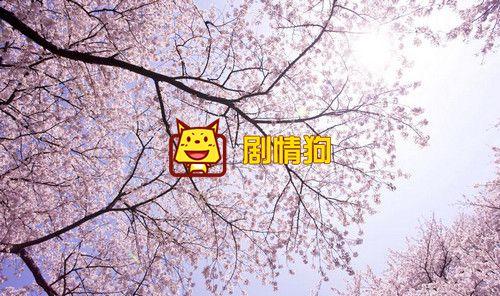 樱花树下的约定吉他谱