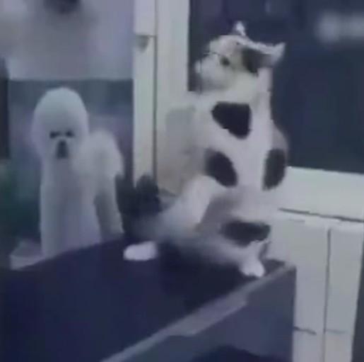 一看就不是什么正经猫