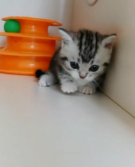 可爱猫咪打瞌睡