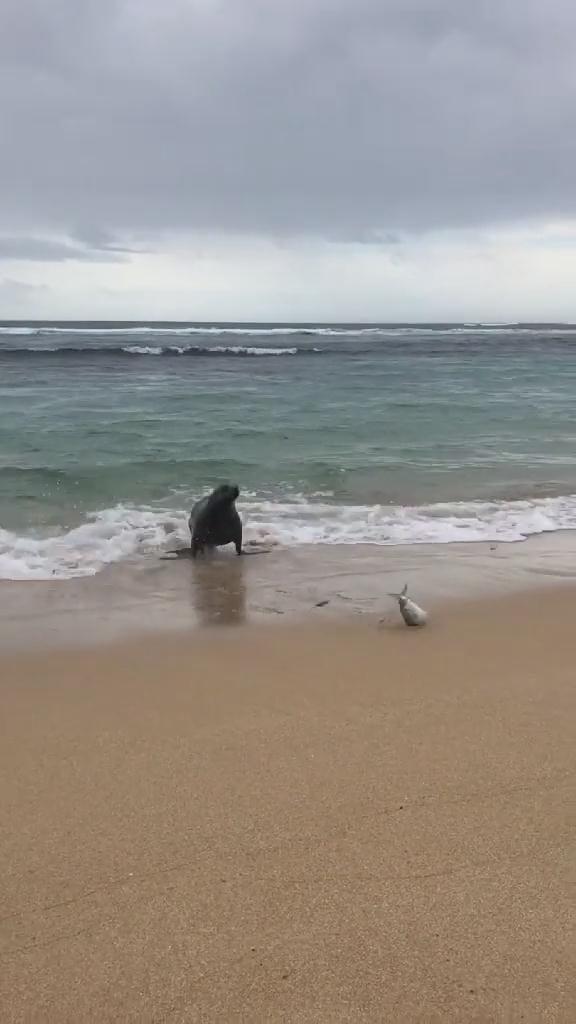 海豹:是谁在套路我!