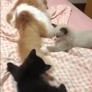 猫生如戏,全靠演技!
