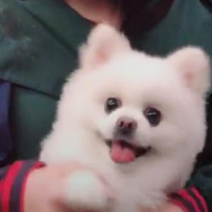 你见过张馨予的狗狗吗