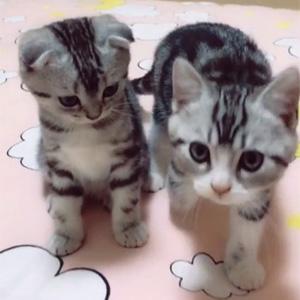 这对儿龙凤胎猫咪太可爱了吧!