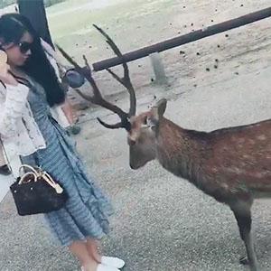 这么有礼貌的小鹿也给我来一只吧