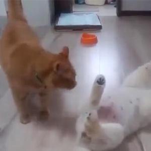 狗子:不来了不来了,投降!