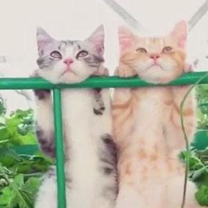 蓝天,白云,小伙伴,这样的猫生很幸福啦