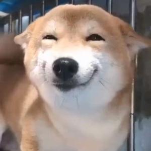这狗子的笑容真是太治愈了
