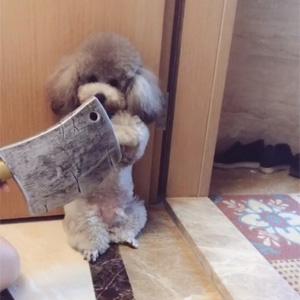 如何教育狗子不要离家出走