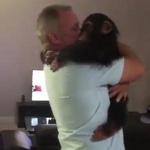 小黑猩猩再见恩人,暖心要抱抱~