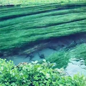 蓝泉~新西兰70%的矿泉水都是这里装的~