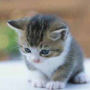 猫中的大猪蹄子 看到美女就停下来