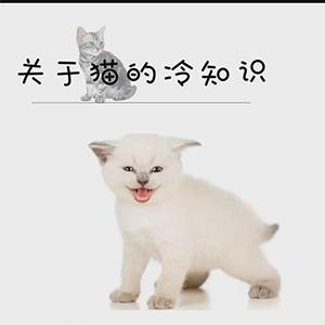关于猫咪的冷知识大全
