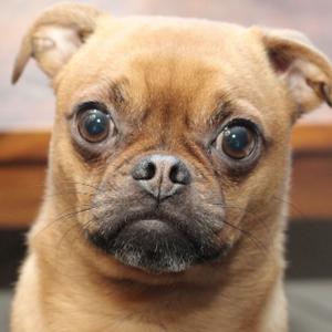 目瞪狗呆是什么样的 吓坏本狗了