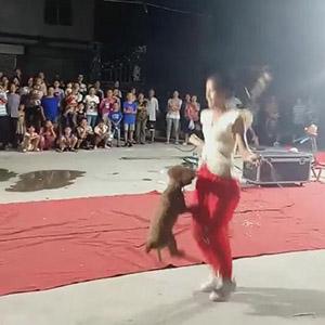 会跳绳的狗狗你见过吗,这不会是哮天犬吧~