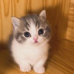 小奶猫一脸乖巧的蹲在角落也太萌了吧