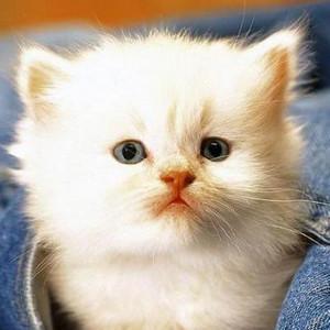 宠物猫见到老鼠是什么反应