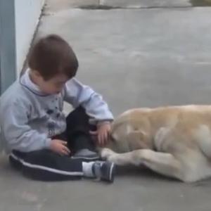 治疗犬耐心陪伴自闭症儿童视频 暖哭了