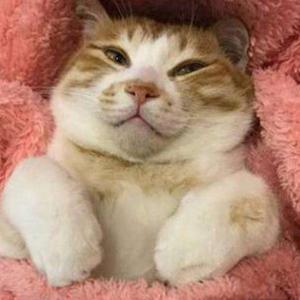 抖音翻译动物语言的软件叫什么 模拟猫叫的软件是什么
