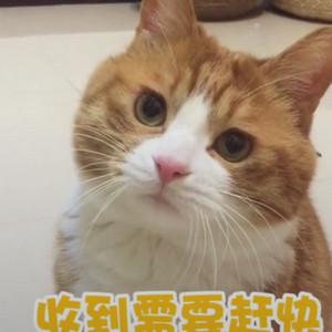 收到需要回复的信息猫咪版 等对象回信息的你