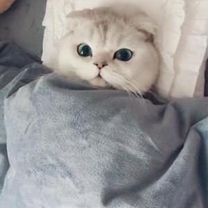 抖音能不能有点猫样