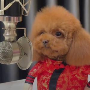 百变萌宠妞妞演唱好嗨哦超可爱 狗狗版好嗨哦