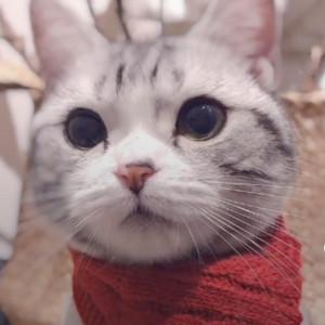 可爱猫咪期盼下雪视频