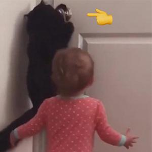 胖猫帮小朋友开门 成精的猫咪