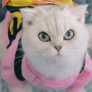 抖音会说话的猫咪交补习费的故事
