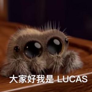 最萌小蜘蛛Lucas全14集合辑视频