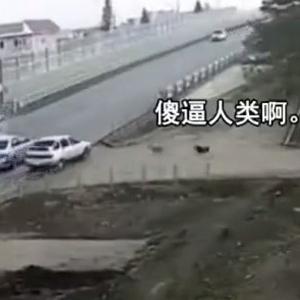 过路口要减速慢行,不然出了事故连狗子都会跑出来嘲笑你