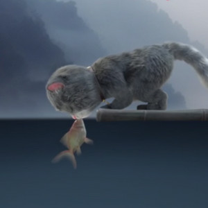 猫咪和鱼亲吻视频手机壁纸
