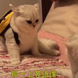 萌猫虎头麒麟弟弟和牛奶妹妹不想上学了视频