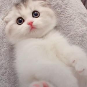 可爱猫咪wink视频 超萌