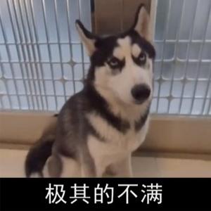 抖音大G一狗做事一狗当搞笑视频