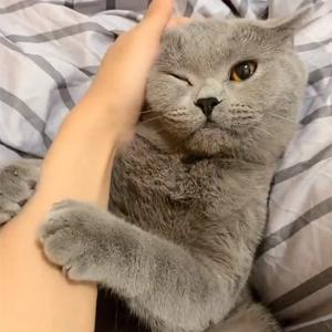 快手蛋不安静盘猫视频 快手蛋不安静是什么猫