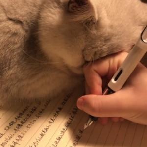 被猫耽误的学霸 这猫太可爱了