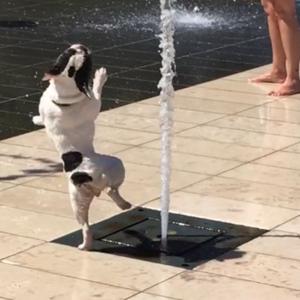 沙雕狗子和水打起来了 太淘气了