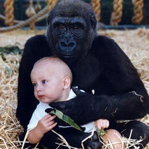 大猩猩用手机刷ins看视频